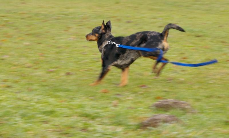 chiens et essai du 50-200 Dog_410