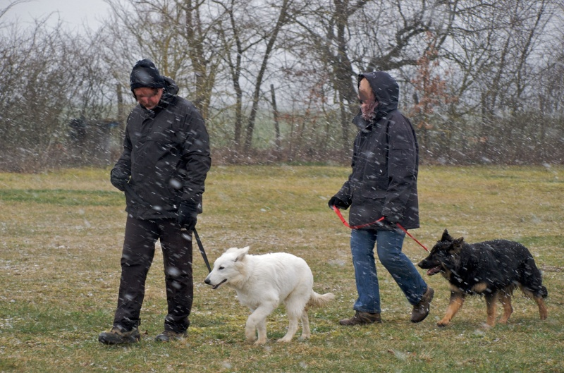 chiens P3064710