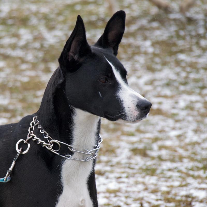 chiens P3064711