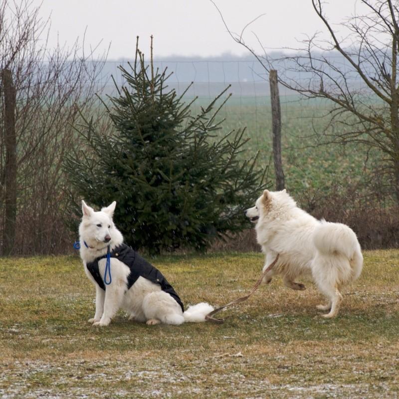 chiens P3064713
