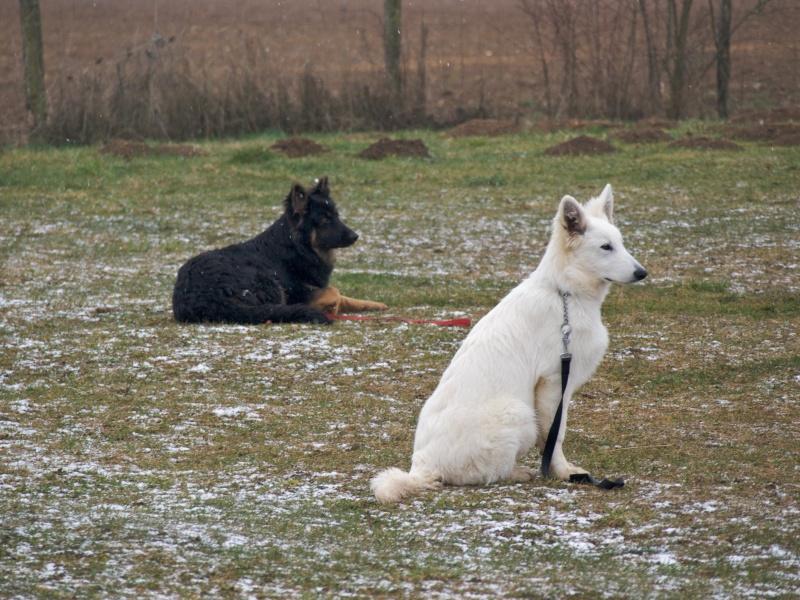 chiens P3064714