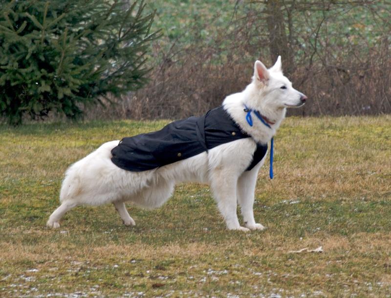 chiens P3064715