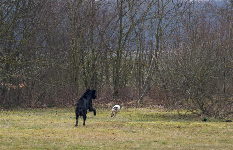 chiens P3064716