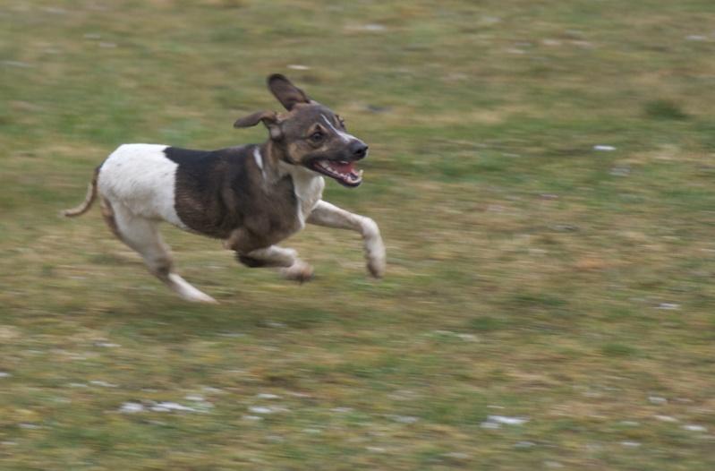 chiens P3064810