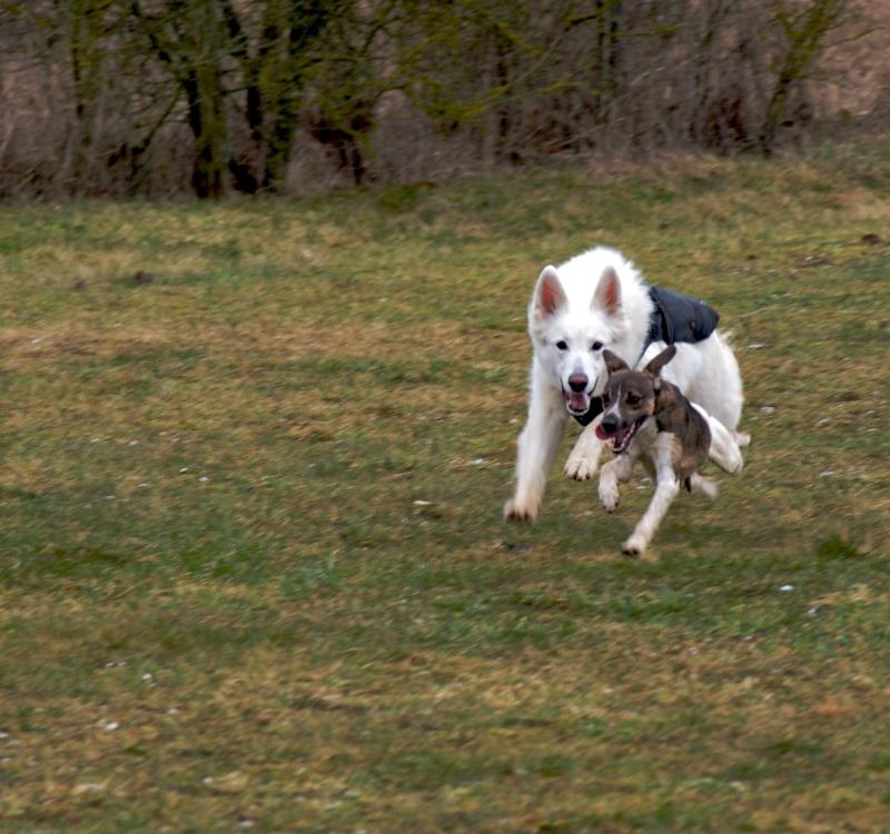 chiens P3064811