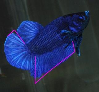 plakat iridescents Pk-sho12