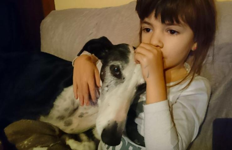 Careta grande galga noire et blanche, bientôt 6 ans.Scooby France  Adoptée  - Page 6 Captur14