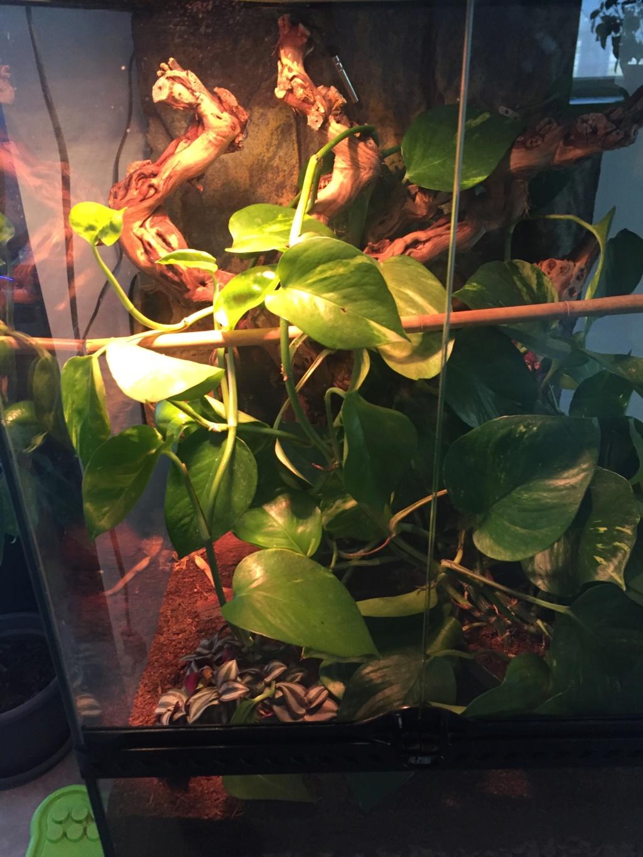 Probleme de comportement gecko a crete Img_0010