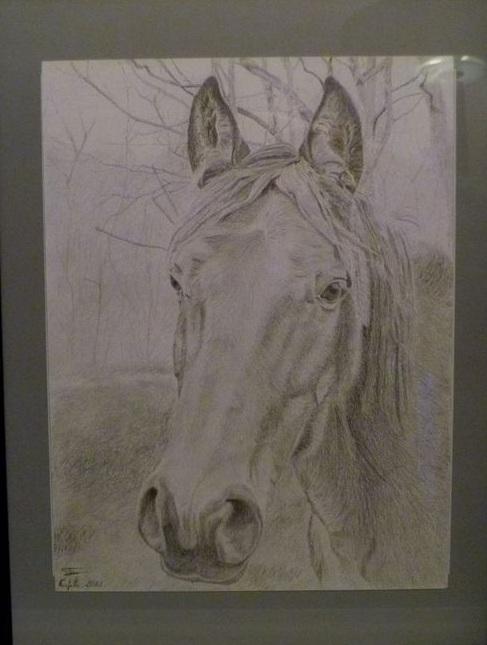Dessin/portrait de vous ou votre cheval Tn_cad10