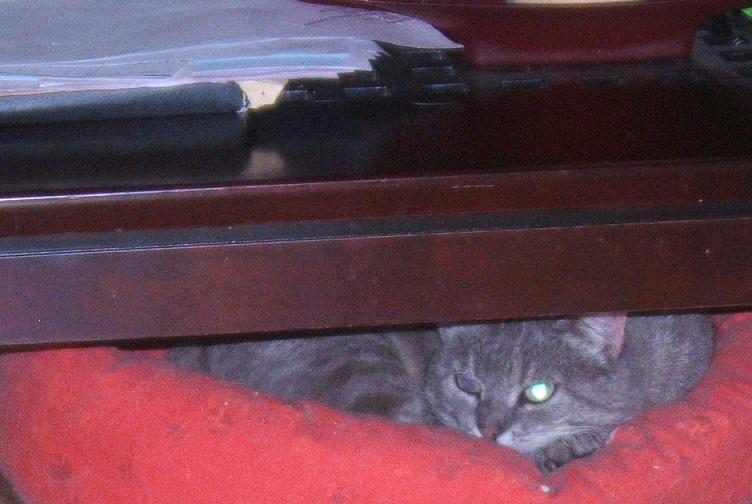 Cartouche, chat gris sauvage Dscf6211