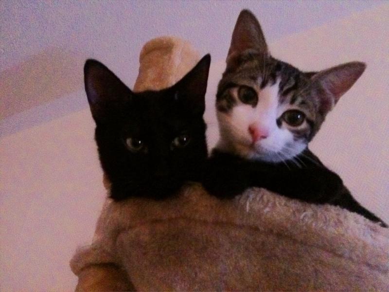 Lilas, 8 mois, et ses 5 chatons née le 29/05/2010 Ipcham10