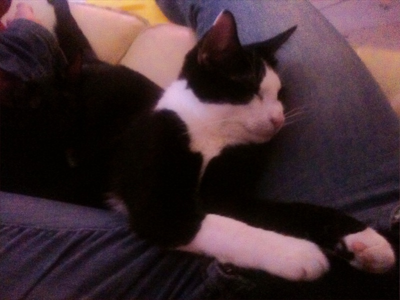 Lilas, 8 mois, et ses 5 chatons née le 29/05/2010 Ippimo10