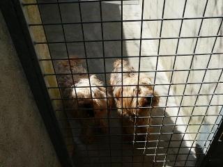A adopter 2 YORKS Sud Drome Yorks012