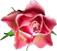le jeu de la rose - Page 5 6d2r1p10