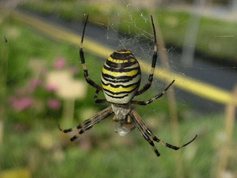 araignée oui mais laquelle Remy_v10