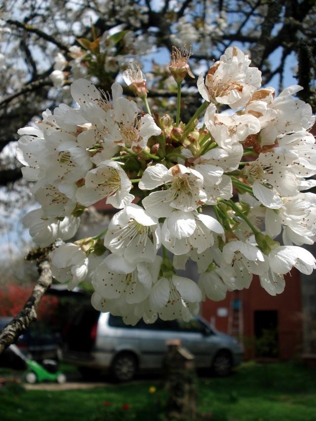 c'est le printemps chez Michelle 511_2853