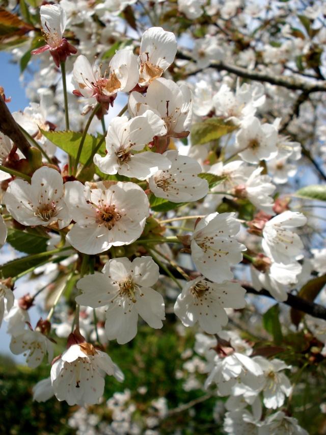 c'est le printemps chez Michelle 511_2860