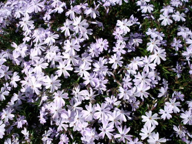 c'est le printemps chez Michelle 511_2861