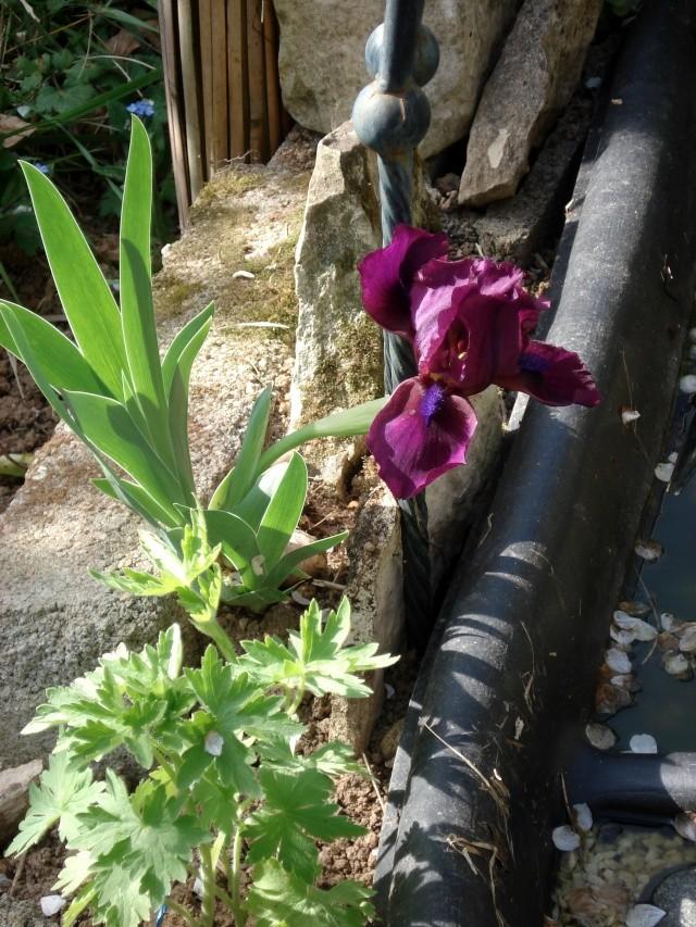 c'est le printemps chez Michelle 511_2863