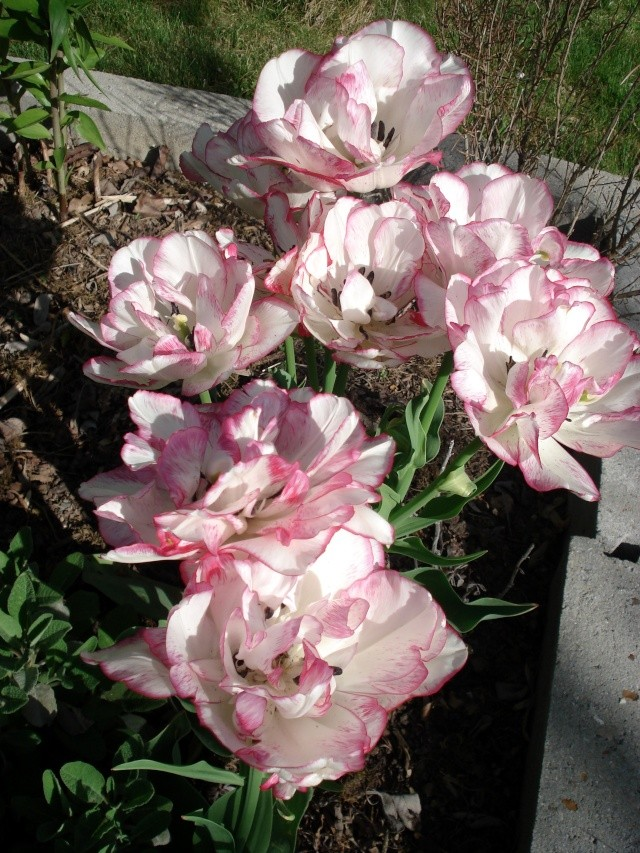 c'est le printemps chez Michelle 511_2885