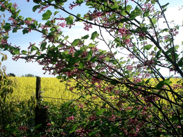 c'est le printemps chez Michelle 511_2887