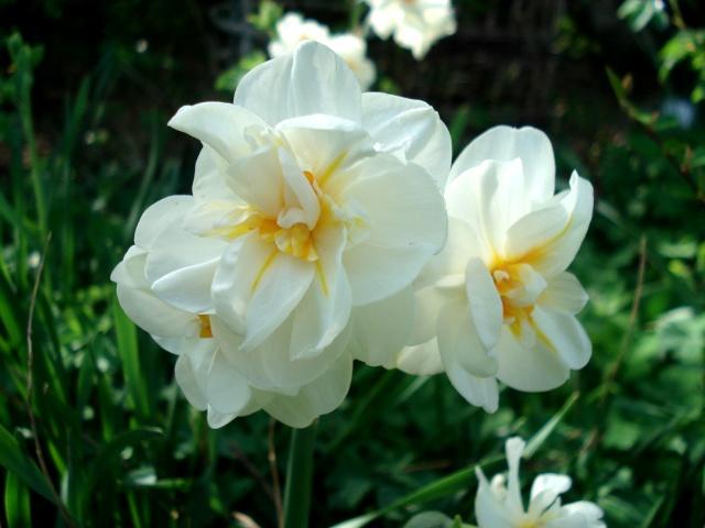 c'est le printemps chez Michelle 511_2890