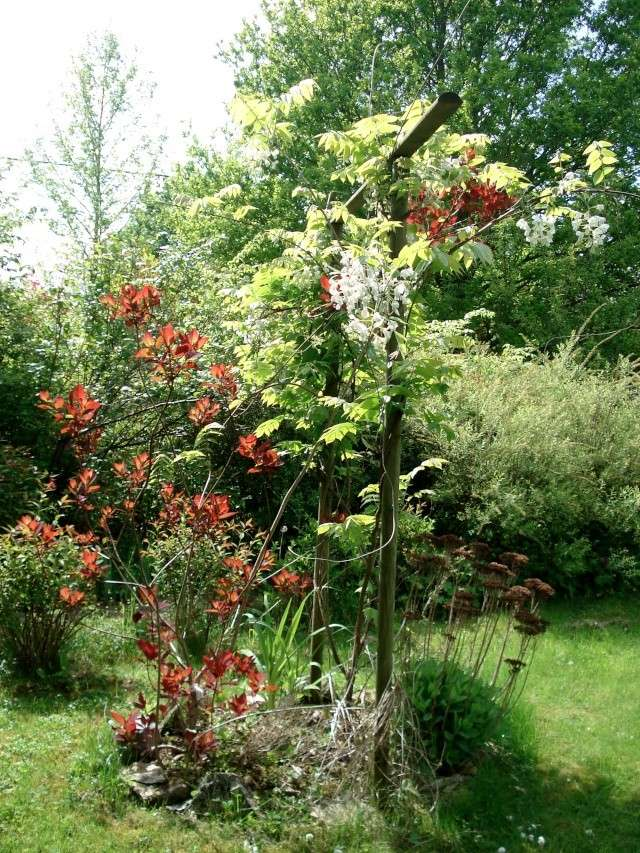 le jardin de Giroflée 2 - Page 33 511_3156