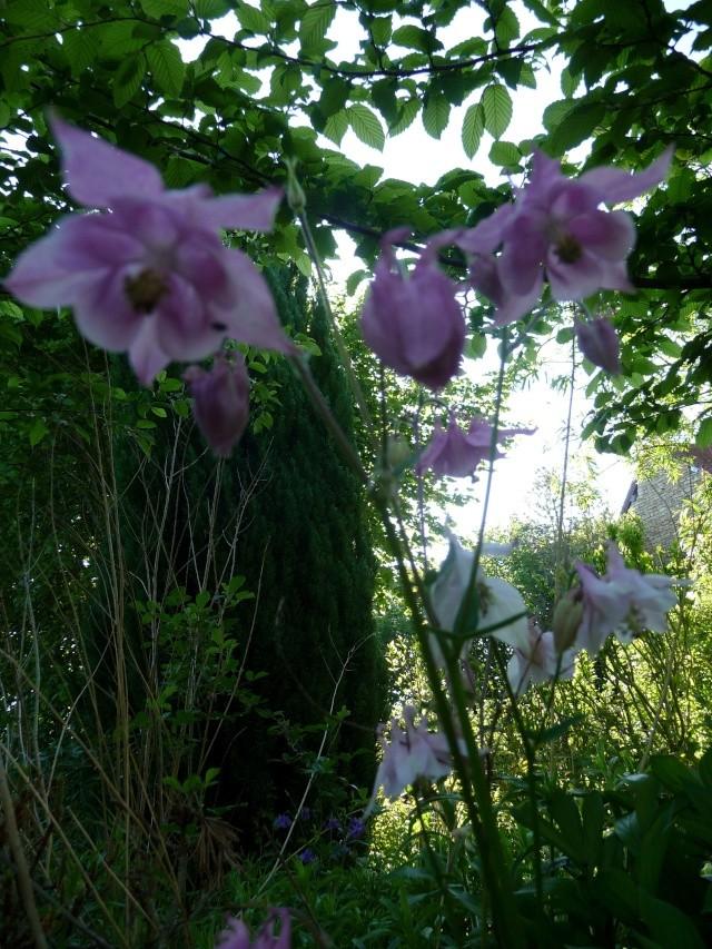 le jardin de Giroflée 2 - Page 33 511_3179