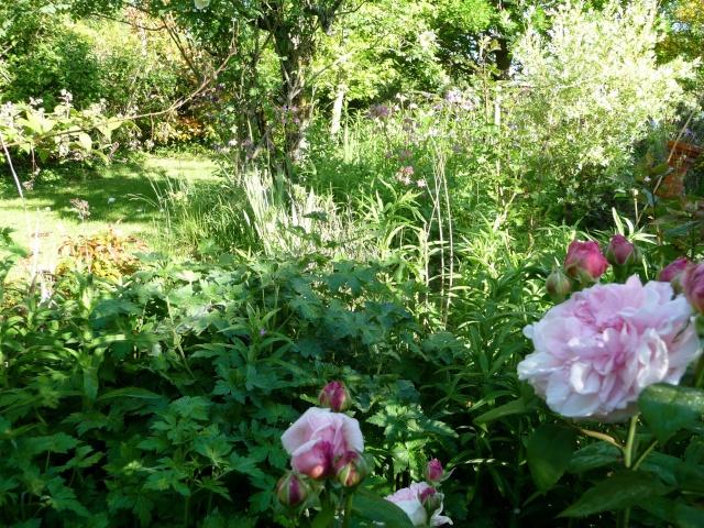 le jardin de Giroflée 2 - Page 33 511_3226