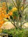 Thème du mois de Novembre : Les couleurs de l'Automne 511_3731