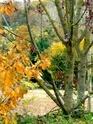 Thème du mois de Novembre : Les couleurs de l'Automne 511_3732