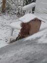 mes écureuils 511_5512