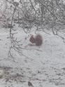 mes écureuils 511_5611