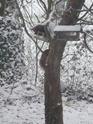 mes écureuils 511_5612