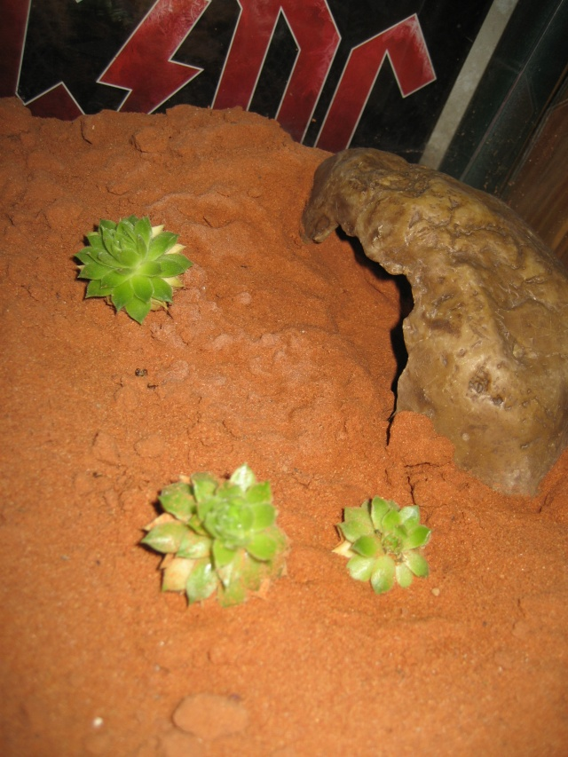 Plantes grasses en terra desertique Adapta10