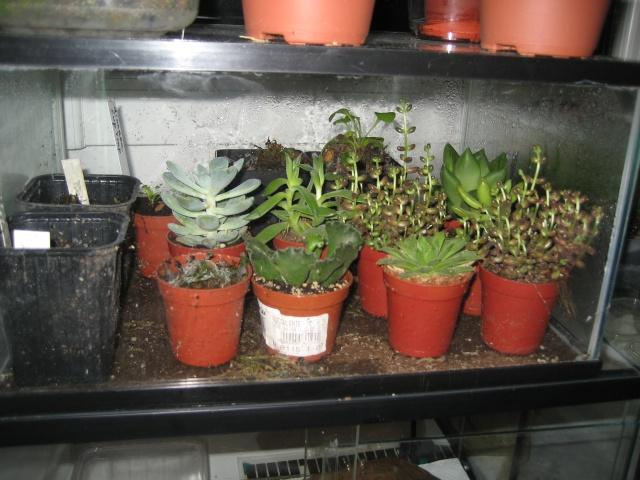 Plantes grasses en terra desertique Adapta19