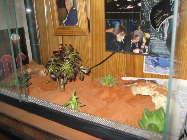 Plantes grasses en terra desertique Terra_16