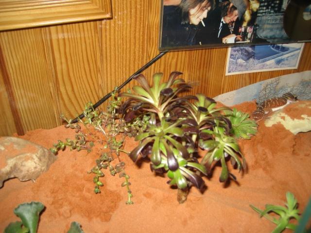 Plantes grasses en terra desertique Terra_20
