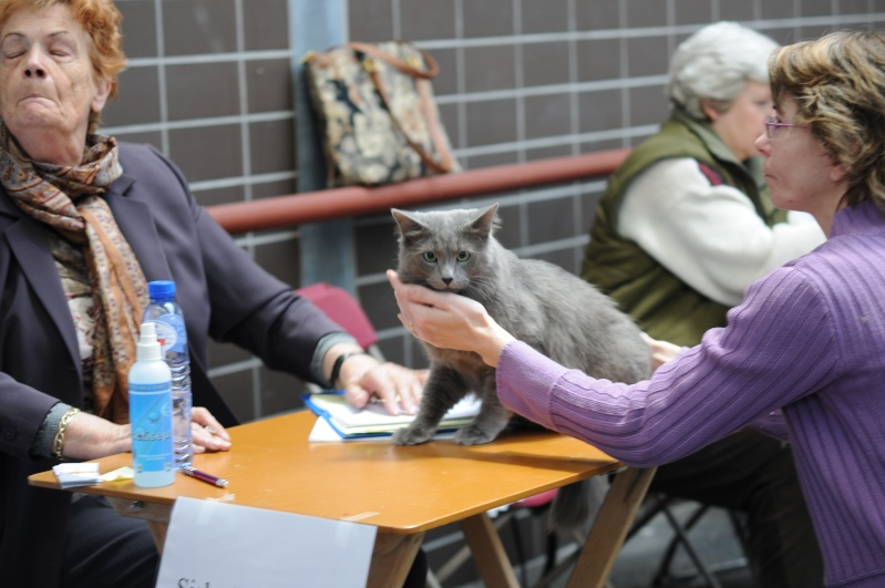 Lunch at the show in Utrecht?- 31-01  will you be there too? - Page 3 Dsc_6110