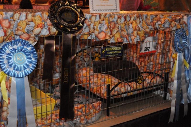 Supreme catshow de Birmingham 2010 Dsc_8312