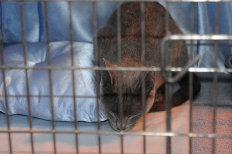 Supreme catshow de Birmingham 2010 Dsc_8313