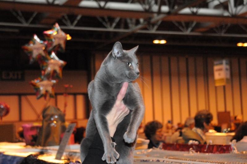 Supreme catshow de Birmingham 2010 Dsc_8316