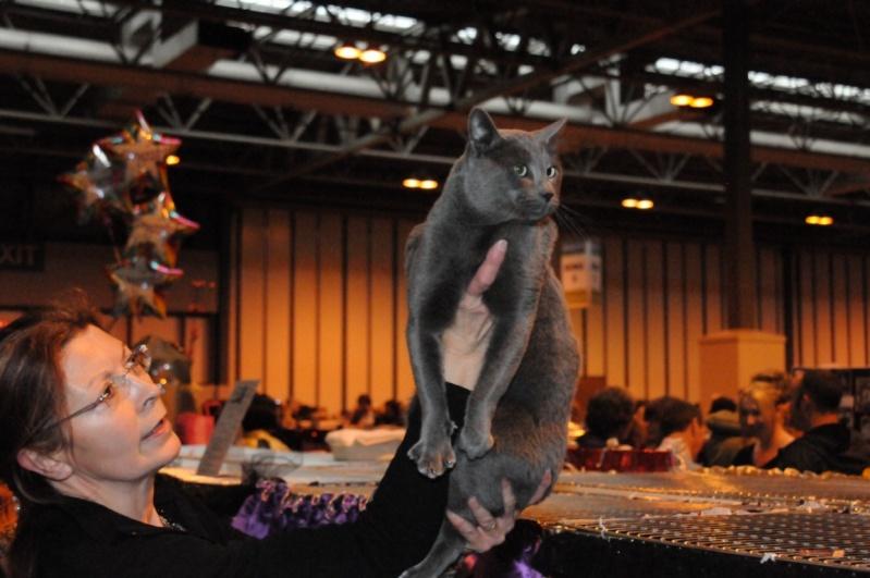 Supreme catshow de Birmingham 2010 Dsc_8317