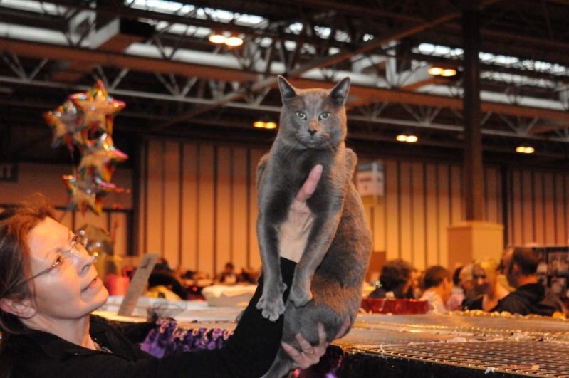 Supreme catshow de Birmingham 2010 Dsc_8318