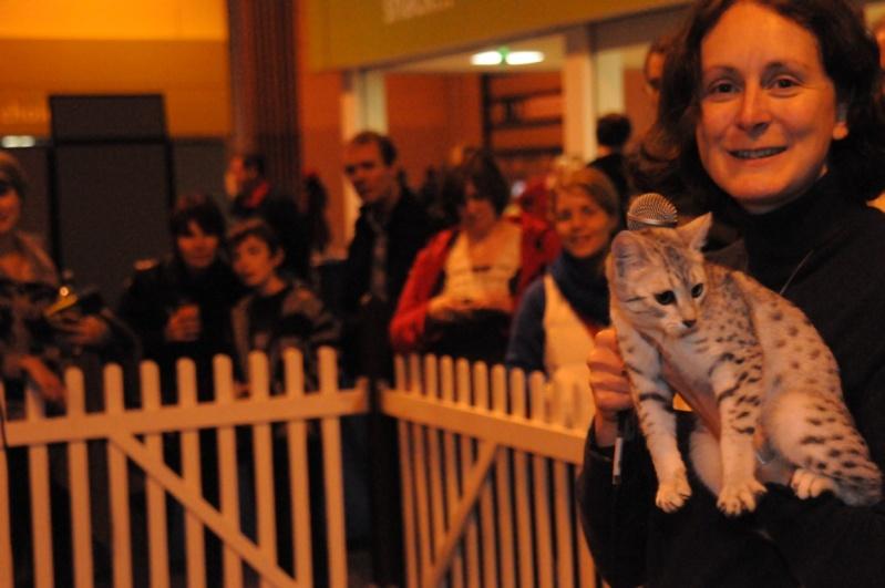 Supreme catshow de Birmingham 2010 Dsc_8320