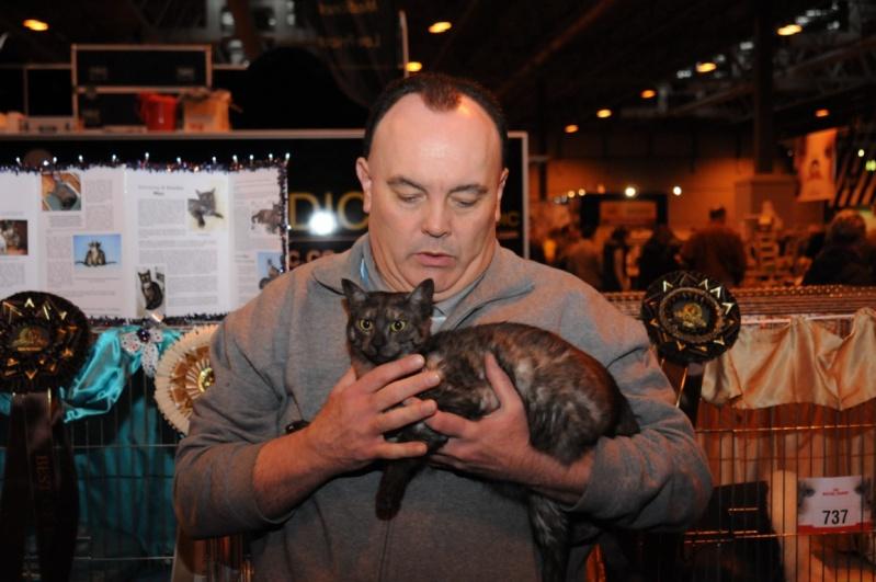 Supreme catshow de Birmingham 2010 Dsc_8414