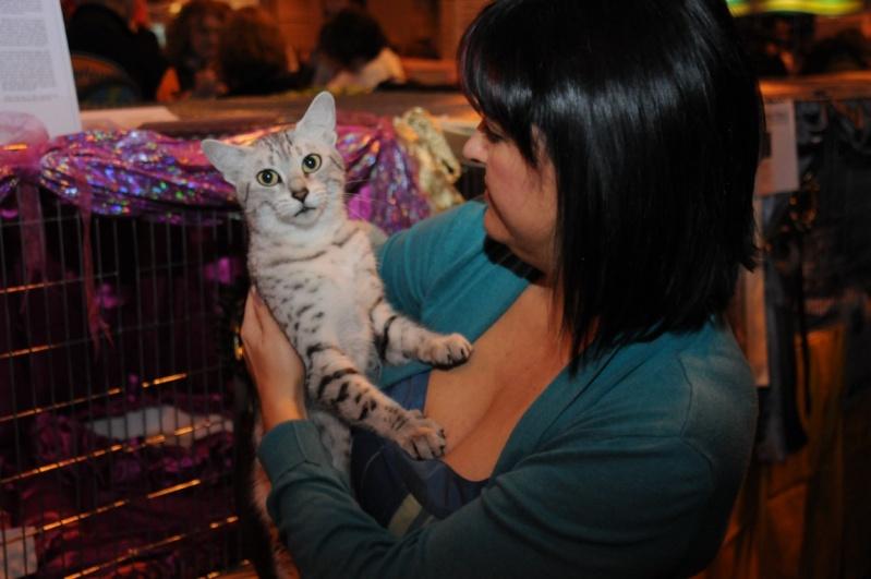 Supreme catshow de Birmingham 2010 Dsc_8415