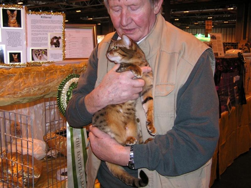 Supreme catshow de Birmingham 2010 P1230110