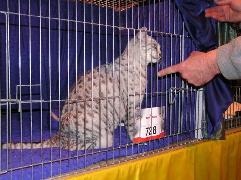 Supreme catshow de Birmingham 2010 P1230111