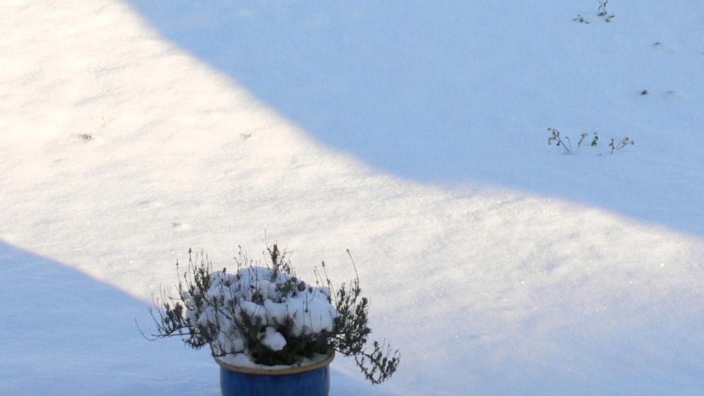 la neige du jour 2009-014